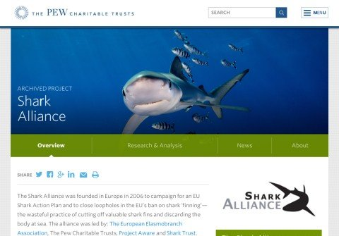 sharkalliance.org thumbnail