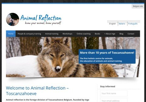 animalreflection.com thumbnail