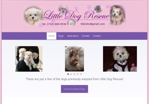 littledogrescue.com thumbnail